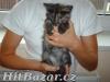 Daruji koťátka