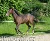 Jezdec a ošetřovatel koní