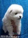Pomeranian štěňata - 2