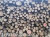 Prodej palivového dřeva - 2