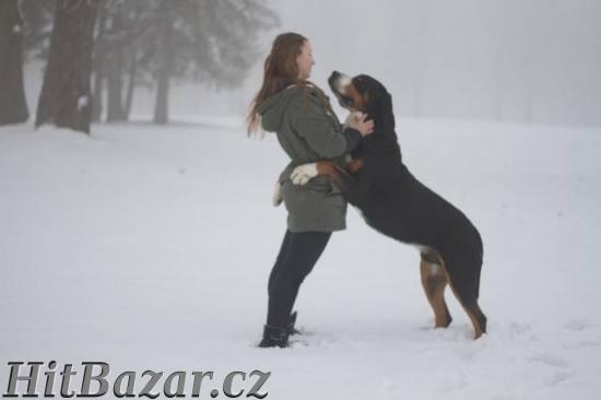 Veľký švajčiarsky salašnícky pes - 4